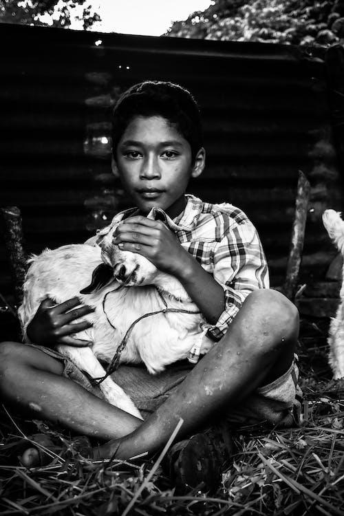 Foto d'estoc gratuïta de assegut, blanc i negre, cabra, expressió facial