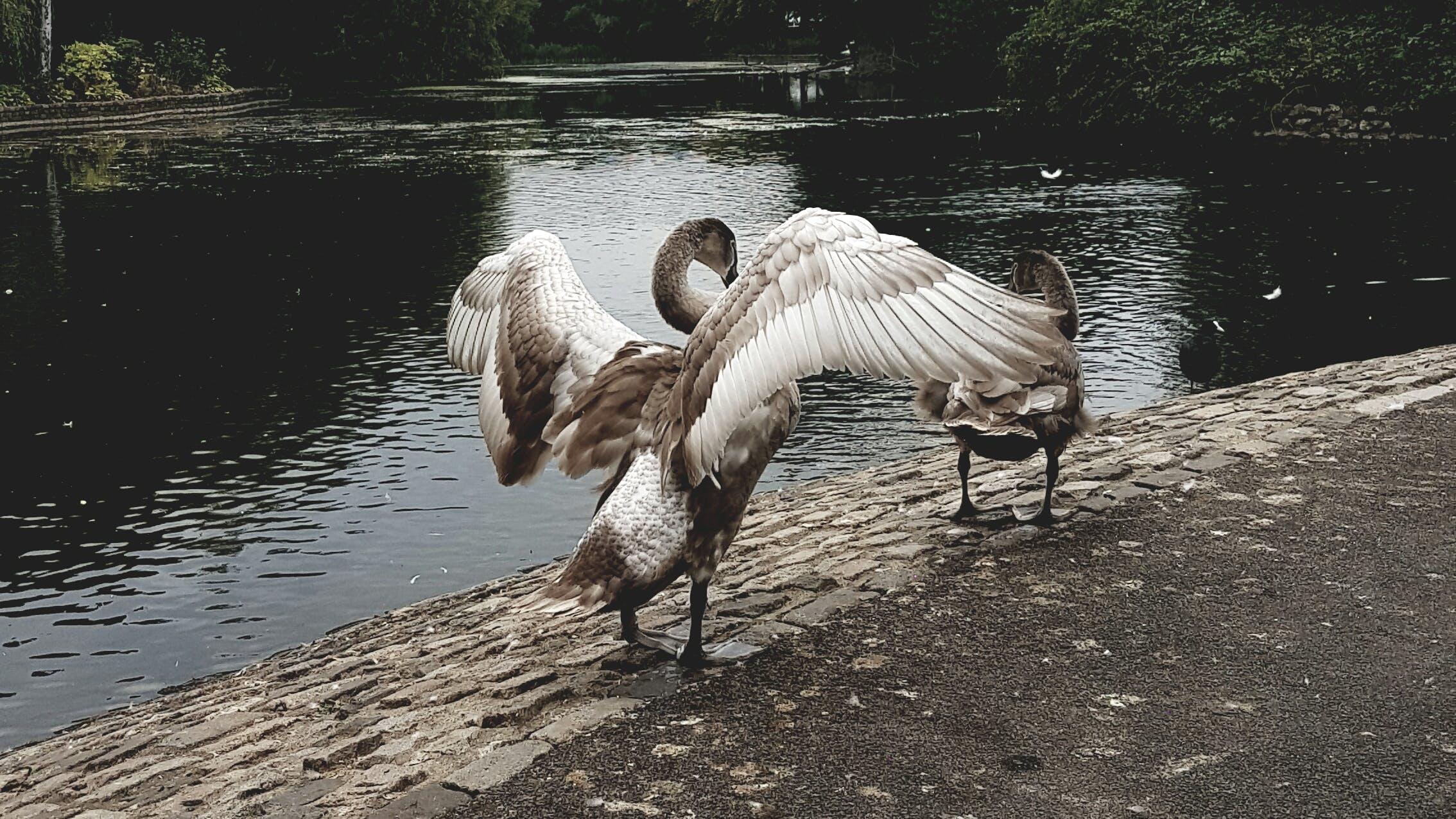 Free stock photo of animal, bird, birds, nature