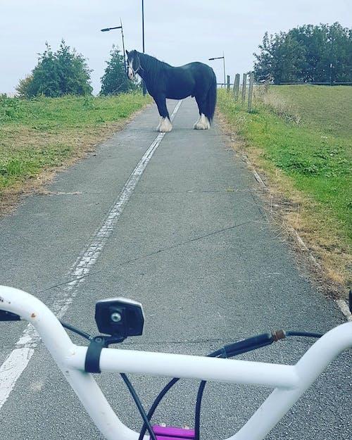 Безкоштовне стокове фото на тему «дорога, дорога закрита, закритий, кінь»