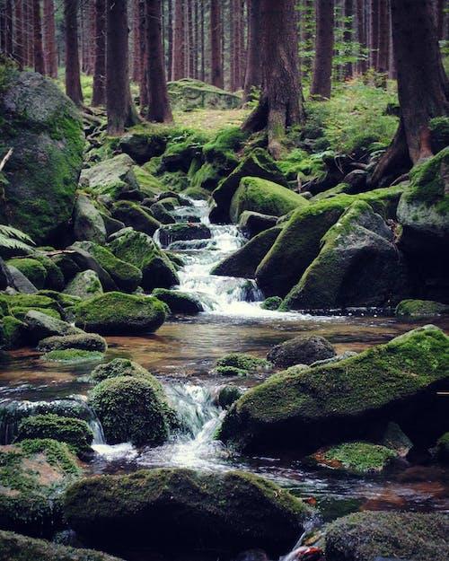 Безкоштовне стокове фото на тему «вода, камені, ліс, парк»