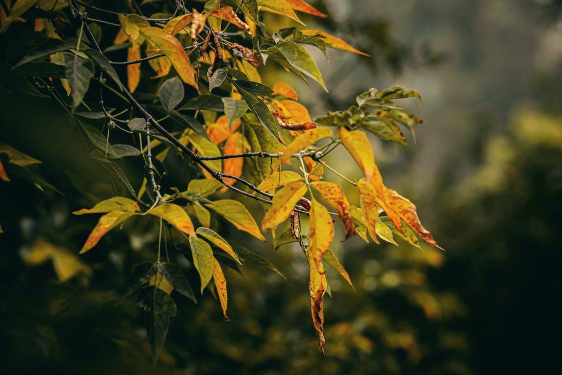 Macro Photography of Yellow Orange-leafed Plants