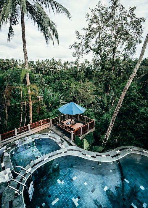 休閒, 假日, 假期, 叢林 的 免費圖庫相片