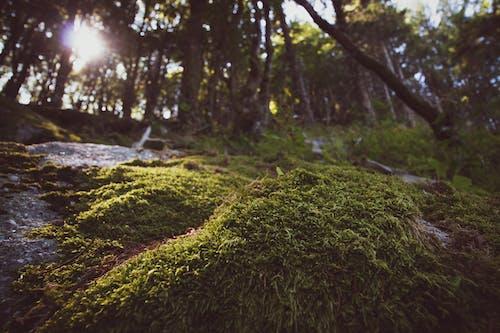 Ilmainen kuvapankkikuva tunnisteilla sammal, vihreä sammal