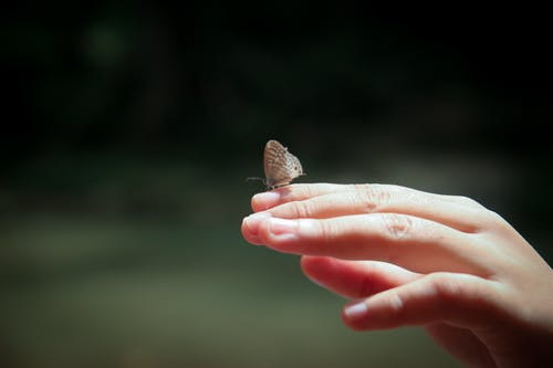Person Holding Gray Butterfly