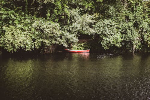 Free stock photo of boat, forest, river, trees
