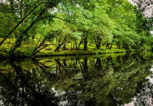反射, 川, 木, 森林の無料の写真素材