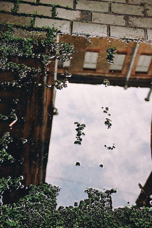 Бесплатное стоковое фото с вода, зеленый, зеленый мох, земля