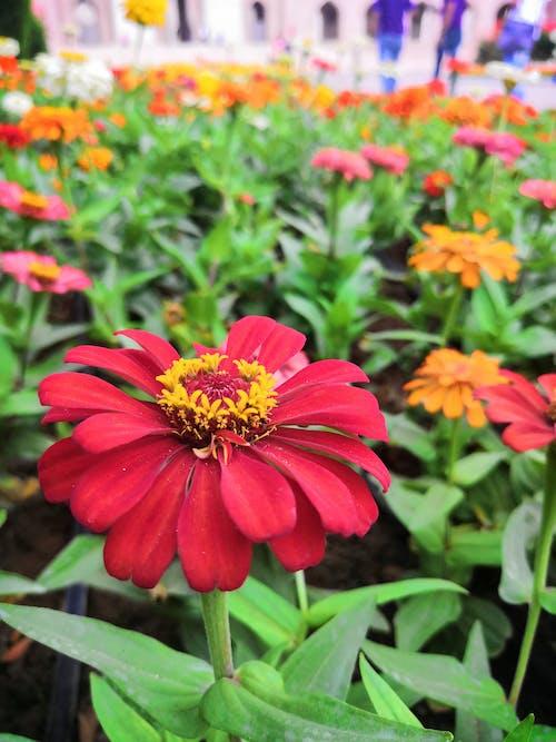 Základová fotografie zdarma na téma krásná květina