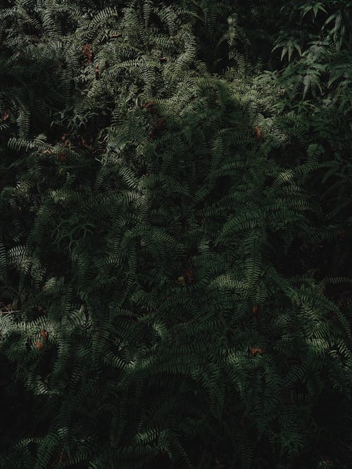 Gratis lagerfoto af blade, Botanisk, bregne, bregneblade