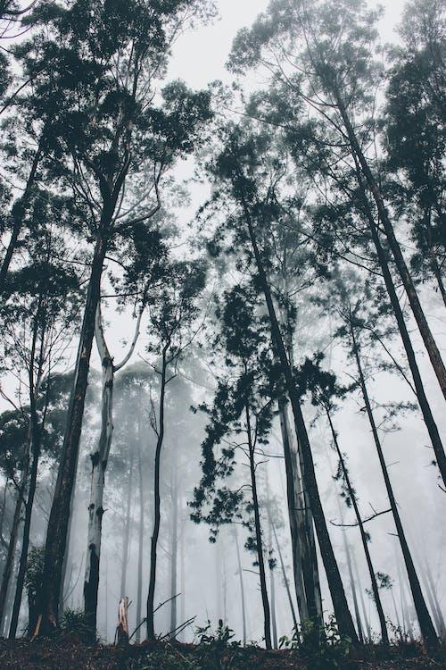 Ingyenes stockfotó alacsony szögű fényképezés, fák, ködös, környezet témában