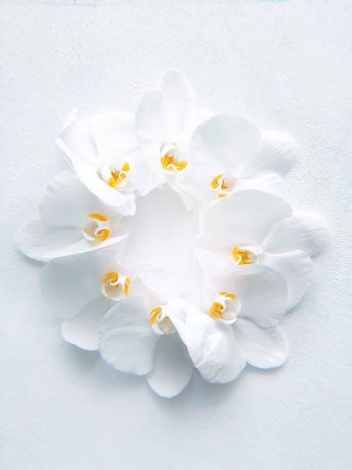 꽃, 꽃잎, 섬세한, 아름다운의 무료 스톡 사진