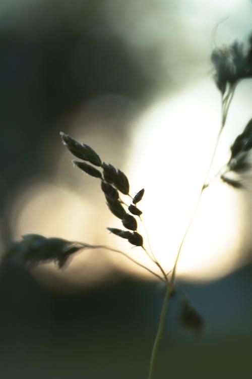 Бесплатное стоковое фото с bokah, былинка, высокая трава, зеленая трава