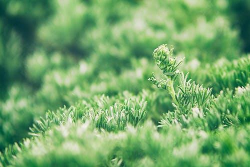 Fotos de stock gratuitas de agricultura, al aire libre, armonía, bosque