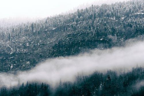 Základová fotografie zdarma na téma atmosféra, čerstvý, dálkový, divočina