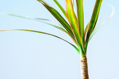 Imagine de stoc gratuită din concentrare, creștere, culori, de mediu