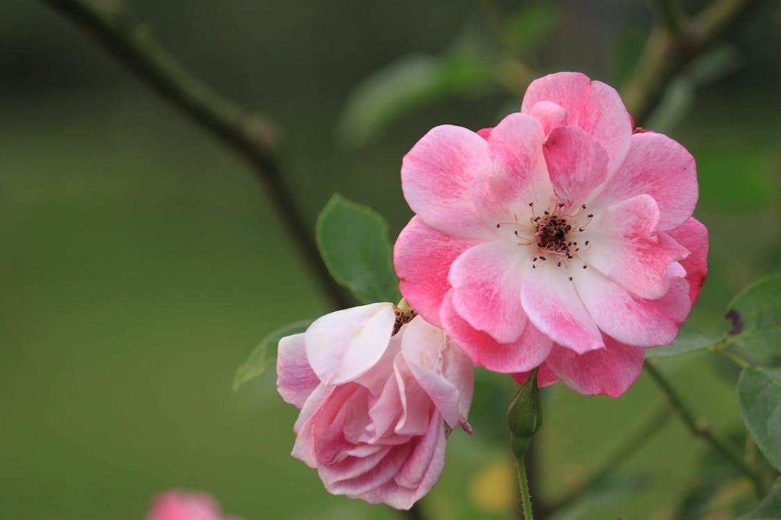 flóra, kvet, kvet ovocného stromu