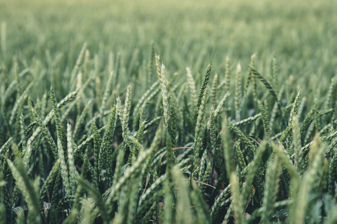 akkerland, boerderij, boerenbedrijf