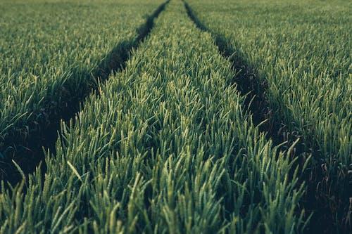 Foto stok gratis agrikultura, alam, bidang, di luar