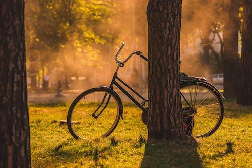 Základová fotografie zdarma na téma dopravní systém, jízdní kolo, kmen stromu, kolo