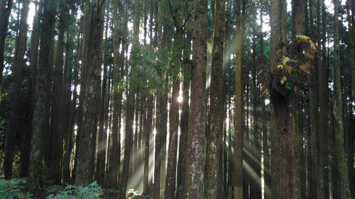 Бесплатное стоковое фото с деревья, легкий, лес, пейзаж