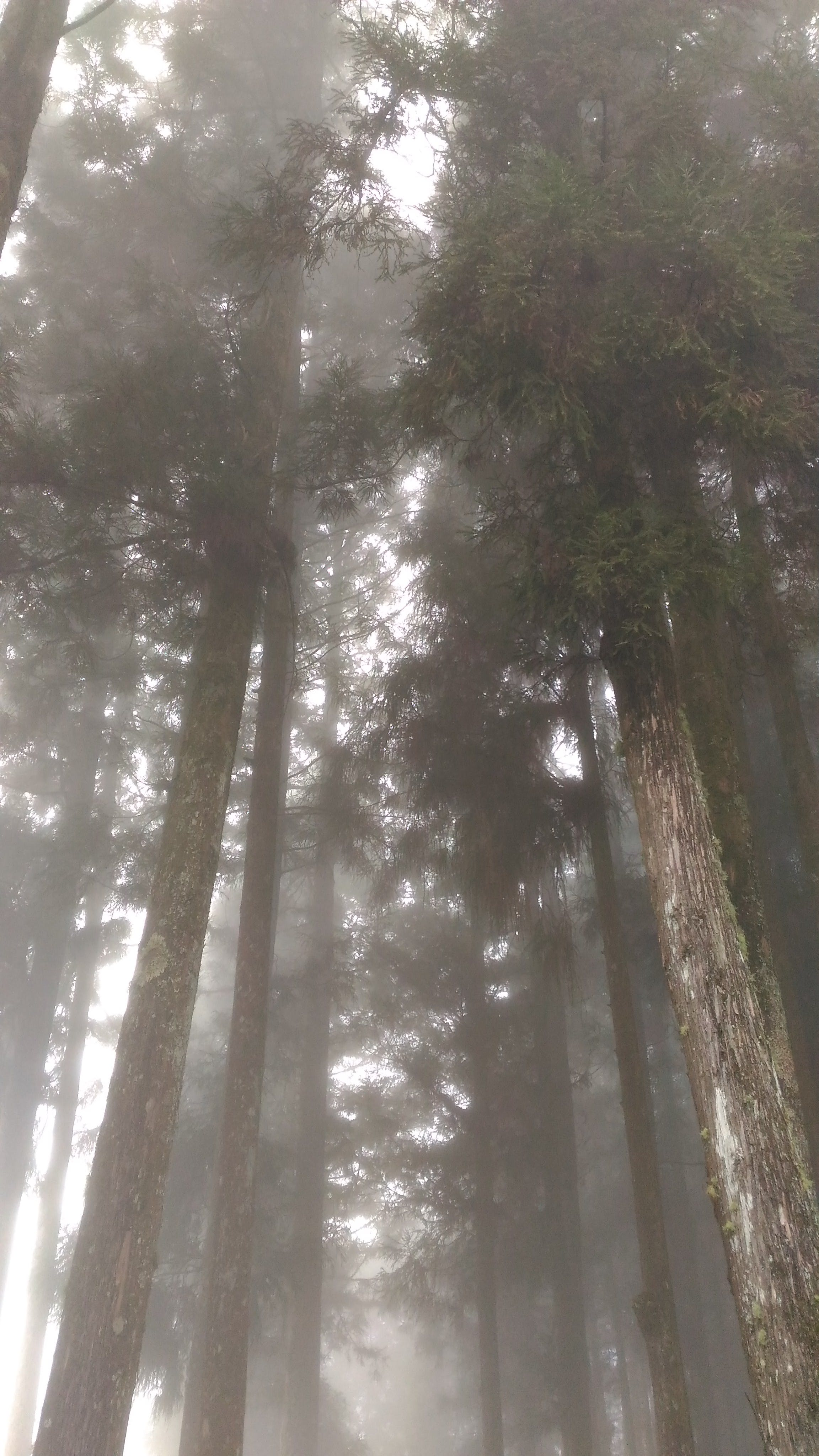 Free stock photo of fog, forest, nature, outdoors