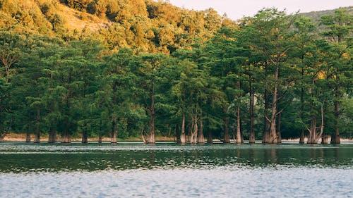 Kostenloses Stock Foto zu bäume, gewässer, hohe bäume, ruhig