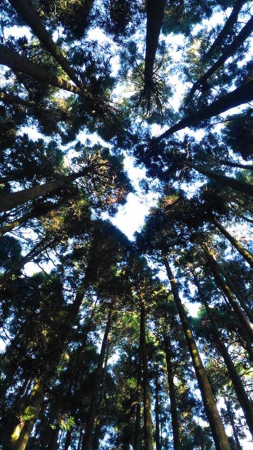 Foto stok gratis alam, hutan, kabut, pemandangan