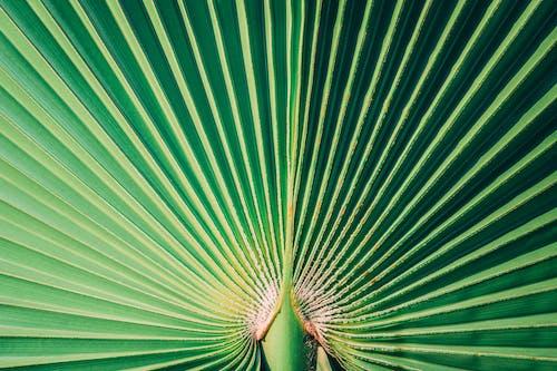 Gratis arkivbilde med blad, grønn, mønster, nærbilde