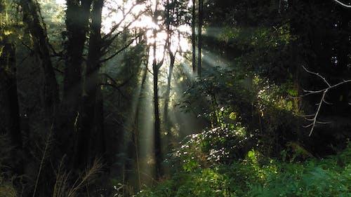 Foto stok gratis alam, cahaya, cahaya dan bayangan, hutan