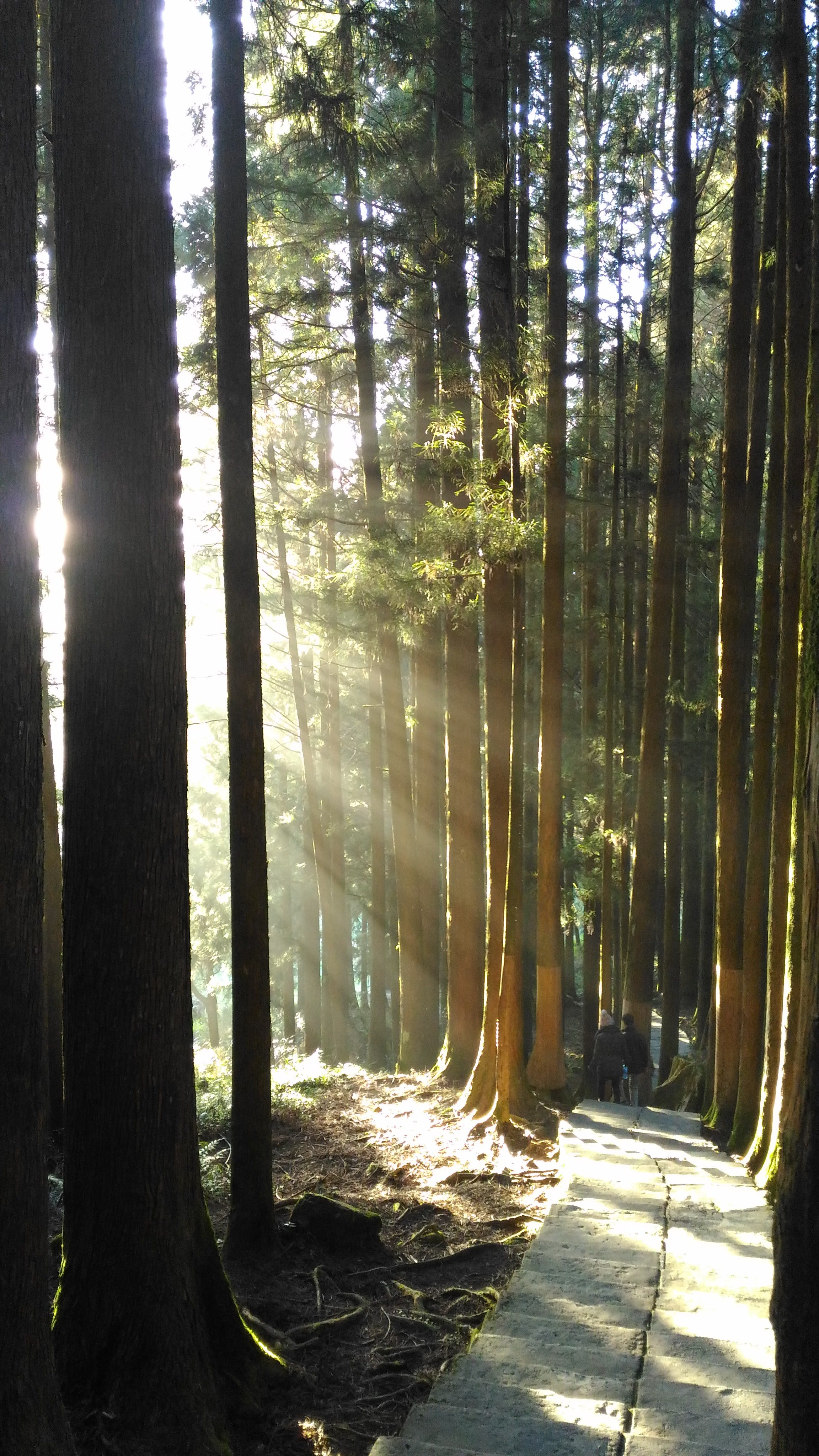 Free stock photo of fog, forest, light, light and shadow