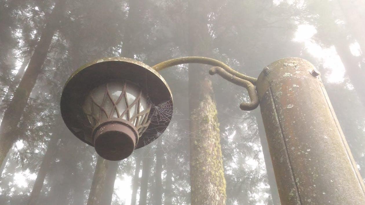 alam, hutan, jaring laba-laba