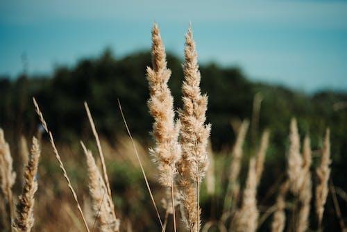 Brown Grass Close-up Photography