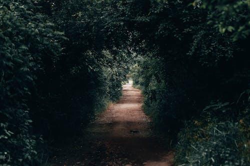 Fotobanka sbezplatnými fotkami na tému cestička, nedláždená cestička, pôda, stromy
