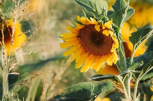 Foto profissional grátis de amarelo, ao ar livre, área, atraente