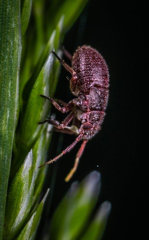 Kostnadsfri bild av insekt, makro