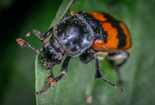곤충, 곤충학, 껍데기, 날개의 무료 스톡 사진