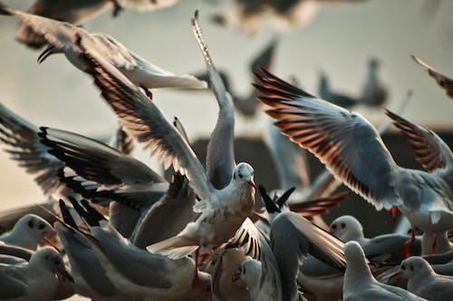 Безкоштовне стокове фото на тему «великий план, глибина різкості, зграя птахів, крила»