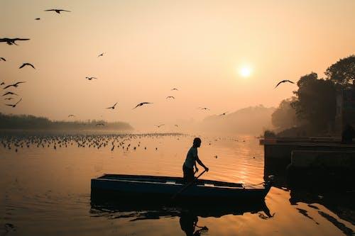 Gratis lagerfoto af åre, båd, flyve, fugl
