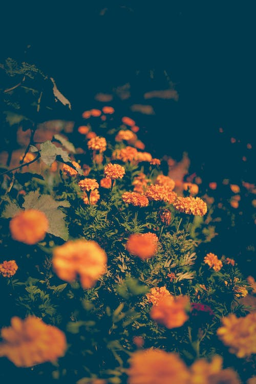 Free stock photo of bitki, blooms, flowers, forest