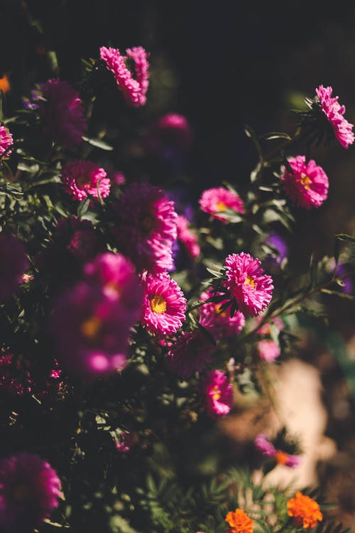 Free stock photo of bitki, flower, pink, village