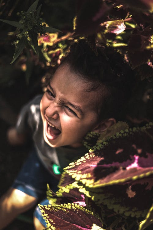 Free stock photo of bitki, child, flower, screaming