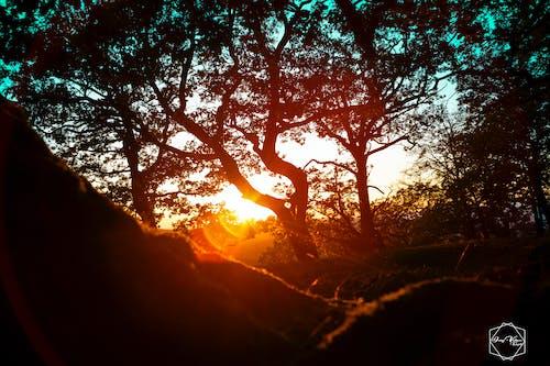Ingyenes stockfotó anyatermészet, egy fa, élet a természetben, gyönyörű naplemente témában