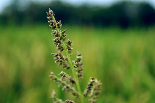 Free stock photo of grass flower, green field, green grass