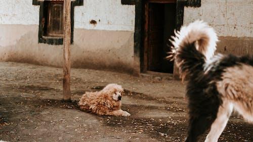 Free stock photo of cute, dog, mountain dog, mountains