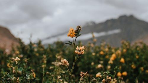 Free stock photo of 4k wallpaper, flower, flowers