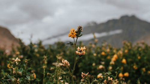Free stock photo of 4k wallpaper, flower, flowers, mountains