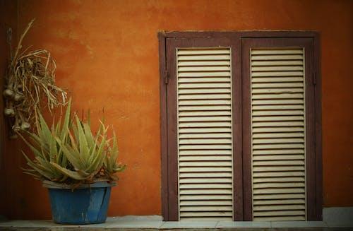 Kostnadsfri bild av #balkong, #god moring, #kaktus, #vitlök
