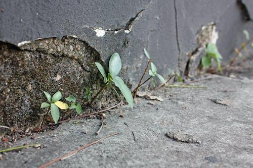 Kostenloses Stock Foto zu beton, das leben in zement, grüne vegetation, kraft der natur