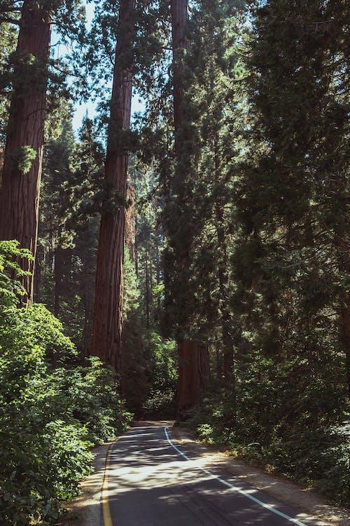 Foto profissional grátis de árvores altas, asfalto, estrada, faixas