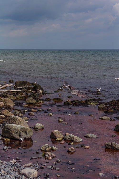 Gratis arkivbilde med danmark, måker, mons klint, rødt vann